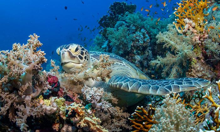 Коралловые рифы (Рас-Мохаммед)