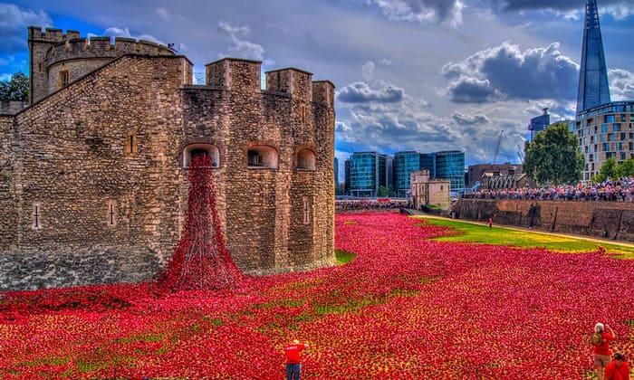 Маки Тауэра (Кровавая башня) в Лондоне