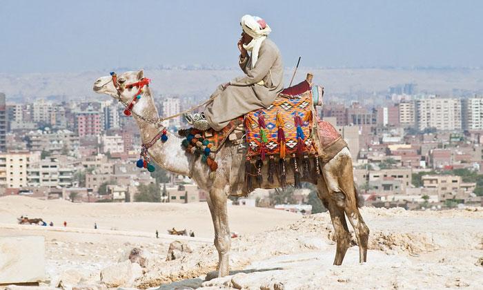 Верблюд и египтянин (Гиза)