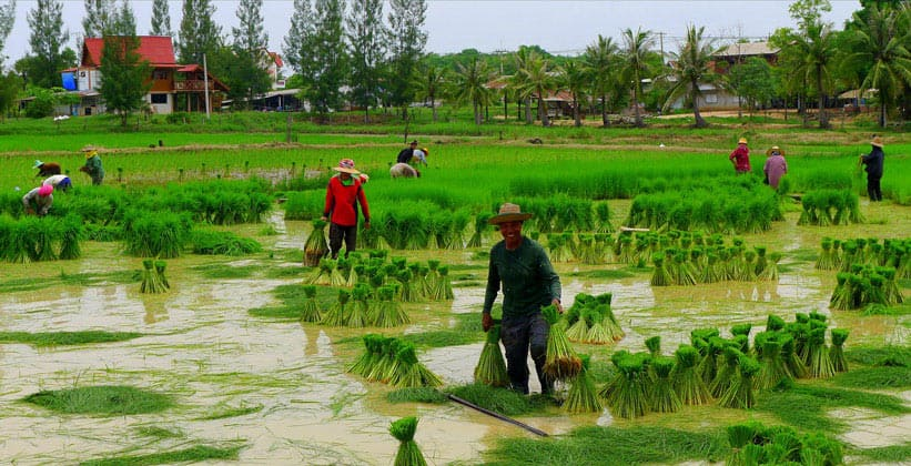 Северо-Восточный Таиланд (провинция Каласин)