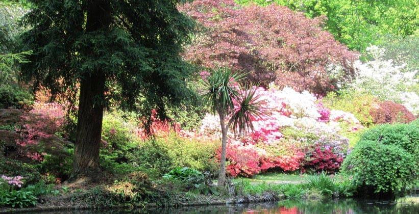 Парк Нью-Форест в Англии