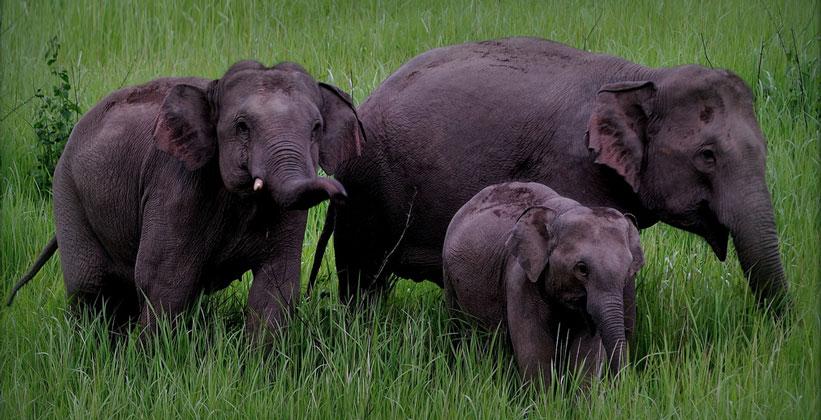 Слоны в Национальном парке Кхао Яй