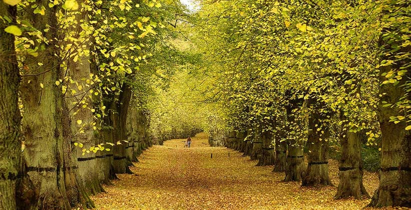Кламбер-парк в Англии