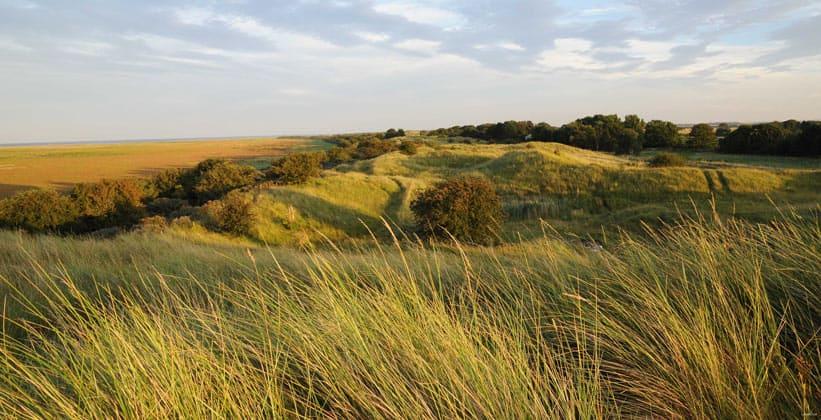 Заповедник Солтфлитби-Тедлторпские дюны в Англии