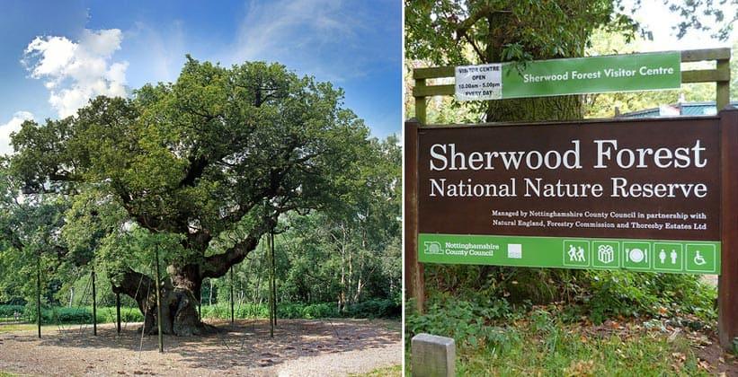 Шервудский лес в Англии