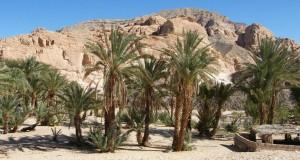 Оазис Ain Khudra в Египте