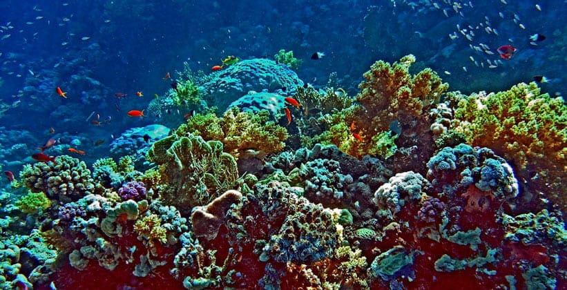 Коралловые рифы Синая