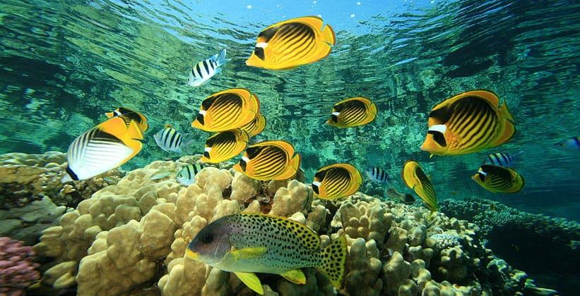 Тропические рыбы Синая
