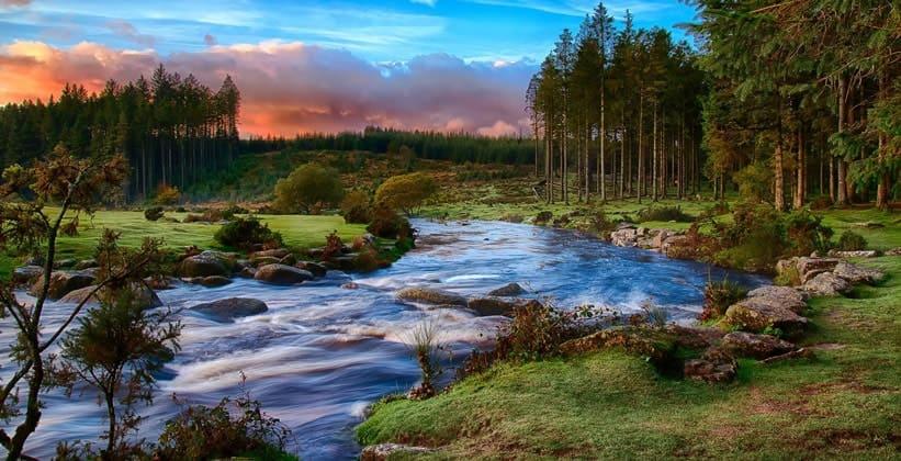 Дартмурский лес в Англии