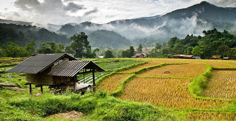 Рисовые поля Национального парка Дой Интханон (Таиланд)