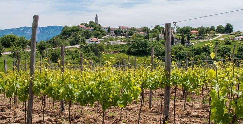 Деревня Грачишце в Хорватии
