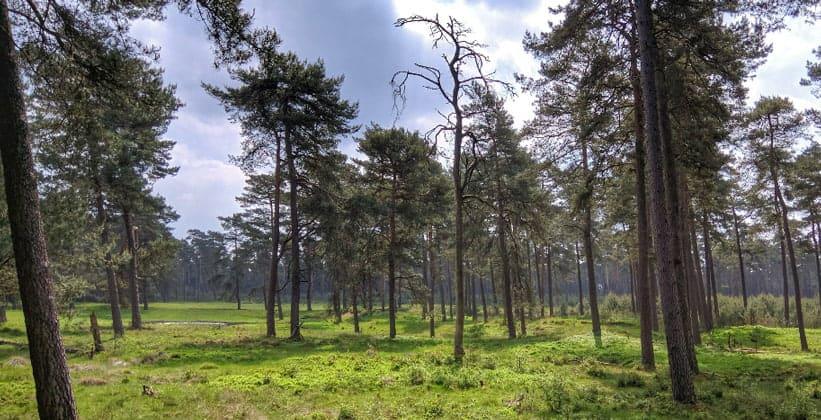 Национальный парк Хоге-Велюве в Нидерландах
