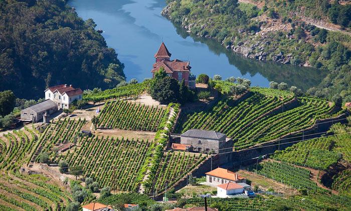 Виноградники Порту