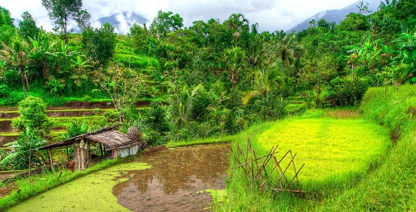 Рисовые террасы Джатилувих на острове Бали