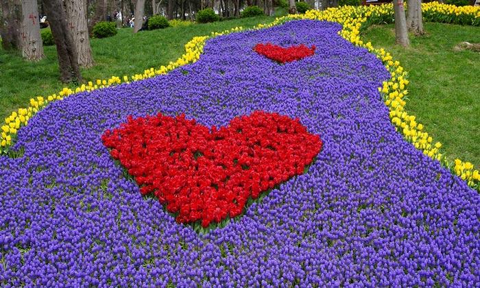 Цветы парка Йылдыз в Стамбуле