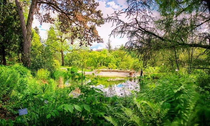 Ботанический сад Берна