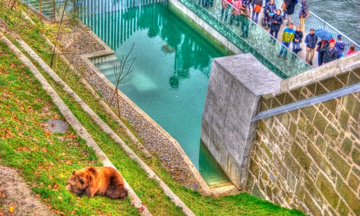 Медвежий парк в Берне