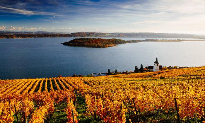 Виноградники Бильского озера